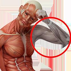 hals nacken schulterschmerzen